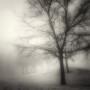 Mary-Dolan_Winter-Trees