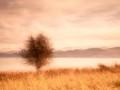 Les-Stringer_Lone-Tree.jpg-nggid03345-ngg0dyn-120x90-00f0w010c011r110f110r010t010