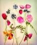 David-Royle_Wild-Flowers