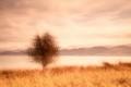 Les-Stringer_Lone-Tree