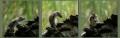 Mary-Dolan_Squirrels-Bath-Time1