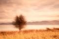 Les-Stringer_Lone-Tree.jpg-nggid03345-ngg0dyn-240x180x100-00f0w010c010r110f110r010t010.jpg-nggid03491-ngg0dyn-240x160x100-00f0w010c010r110f110r010t010