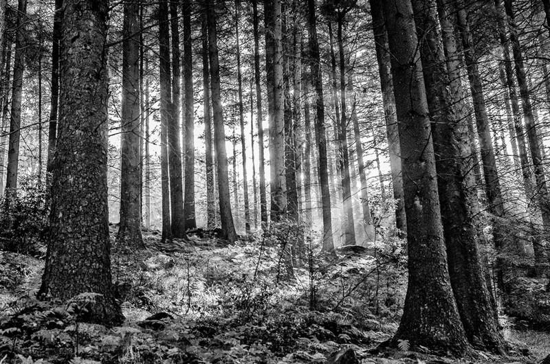 PAT SAWAS - Dappled Forest light